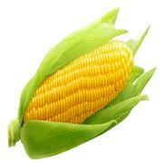 梦见金黄的玉米什么