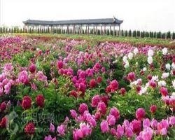 汉牡丹园景区